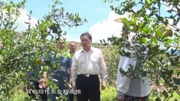 双柏县:用绿水青山铸就发展的金山银山_云南楚雄网