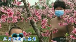 《阳山桃花红满天 2020》