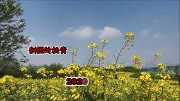 2020 益阳十洲公园   油菜花香