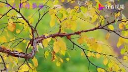 桃花树下唱情歌