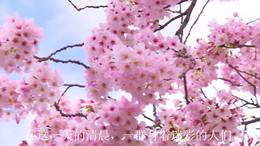 【撤离在清晨】作者、朗诵:王丽平