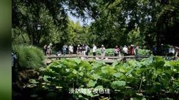 第八届上海荷花睡莲展(2)20200630
