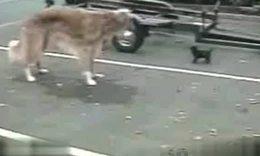 趣味视频:狗