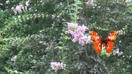 《酒醉的蝴蝶》歌声优美动听