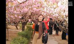 青龙寺赏樱花