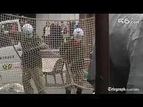 又到了一年一度日本动物园卖萌的日子了,演习的内容是犀牛越狱警察叔叔追捕。擦,这货根本就是特摄剧嘛。