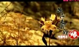 阿鲁阿卓--遇上你是我的缘(原版MTV)