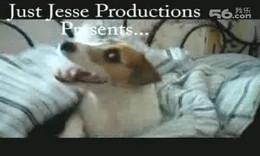 1884-视频欣赏:这只小狗太棒了!