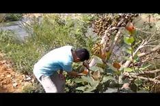 广西巴马之旅 生活 高清完整正版视频在线观看 优酷