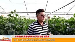 元谋:小黄瓜兴起大产业_云南楚雄网