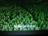 《让我的祖国更绿》【WB】(甫人   刘亚芹 2021 1 16