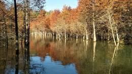 宁国红杉林一日游电子相册 音乐:谁见过梦中的草原梦中河。