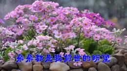 01诗朗诵<一棵开花的树>