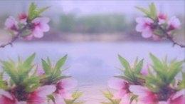 02诗朗诵<一棵开花的树>
