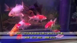 小金鱼快乐的生活
