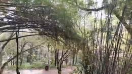 鱼儿湾公园游园记 视频制作.舞者清心