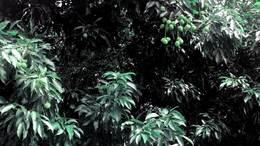 20210523椰林纳凉(莲花山公园)