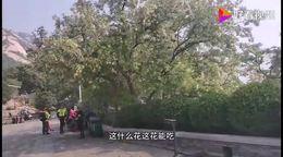 传闻这是有清华北大高材生出家的地方,参观北京龙泉寺