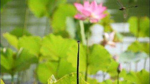 爱剪辑 蜻蜓