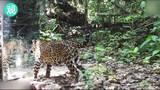 在亚马逊雨林里放面镜子 动物们是啥反应?