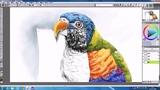 【蔡叔叔讲画】40.创意绘画之鹦鹉的素描