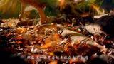 残酷的生活环境,动物们居然这样生存,好像比我们人还要强!