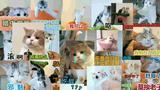 太好笑啦!橘猫简直就是行走的表情怪!