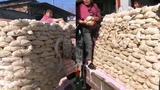 【河北】新郎送女方3000斤馍 还邀全村来吃沾喜气
