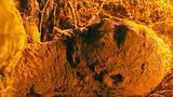 老人被埋在土里10多年,不吃不喝还活着,告诉孙子地底有个黄金坑!