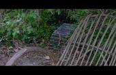 《贝拉的奇幻花园》预告片