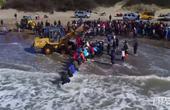 阿根廷志愿者救搁浅虎鲸