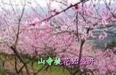 《大林寺桃花》 白居易 视频朗诵