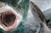 揭秘人鲨大战背后冷知识