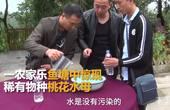 """农户鱼塘惊现桃花水母 堪称""""水中大熊猫"""""""