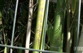 【郑州】公园竹林刻满情话成表白林 大爷看不惯