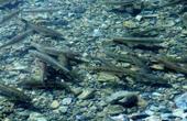 西藏的湖里到处都是鱼,为什么无人敢去钓?