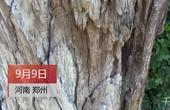 【郑州】价值百万街头珍贵木雕无人管腐烂不堪