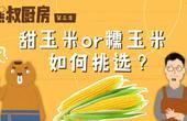 探索玉米的秘密