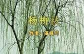 《杨柳枝》 温庭筠  视频朗诵