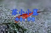 《苏小小墓》李贺 视频朗诵