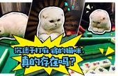 沉迷于打麻将的猫咪,真的存在吗?