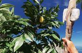 荒岛求生游戏 这种树上可以得到梨的种子