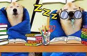 懒癌动物!一看书就想睡觉