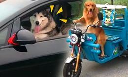 穩!動物界的那些老司機們