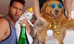 寵物們也來挑戰踢瓶蓋啦!