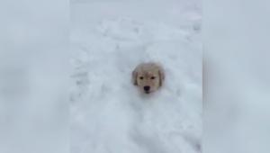 汪星人喵星人遇上大雪 满满的都是戏
