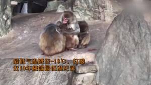 -10!北京动物园猴子们御寒方式让人感到趣味十