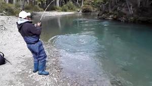 难以想象,小伙河边钓了一条巨型三文鱼,费了