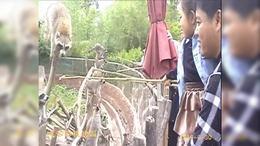 游览动物园