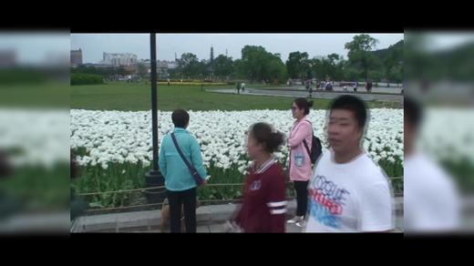 人民广场郁金香人海如潮在观赏VSP